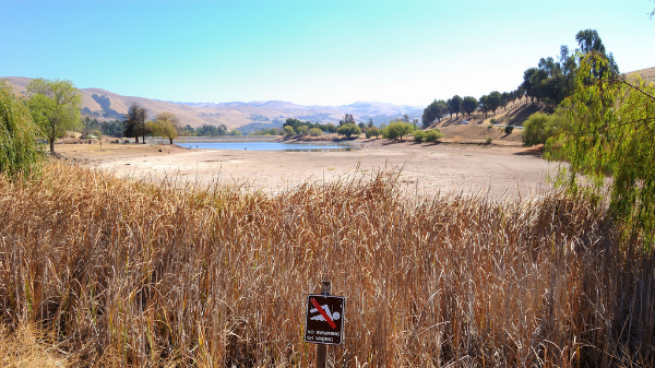 Very low water line at Sandy Wool Lake in Milpitas is a clear example of the current drought.  Photo by  Don DeBold