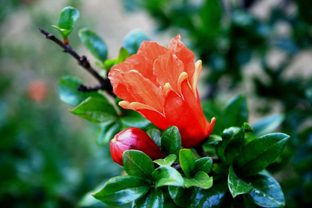 flower-212772_1280.jpg