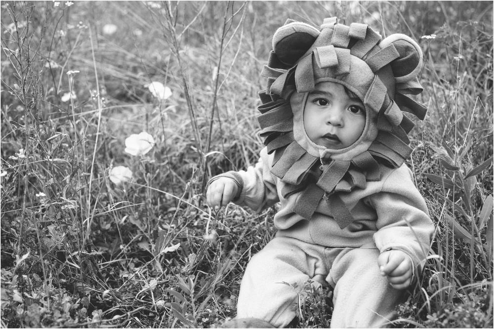 lion_0017.jpg