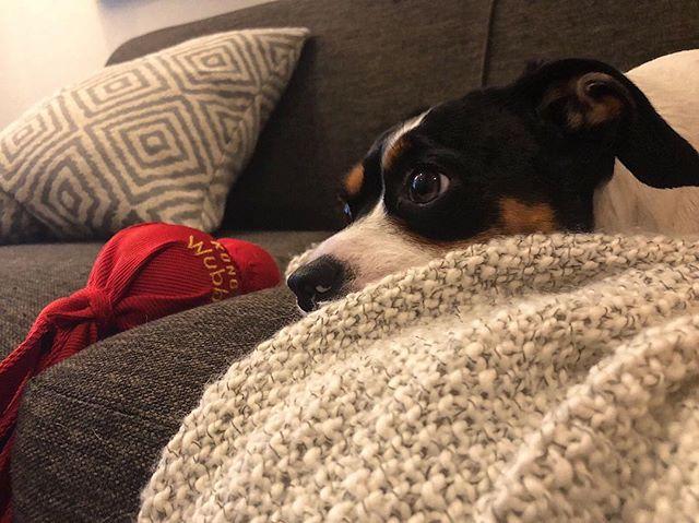 My Harry Potter watching buddy. #dogsofinstagram