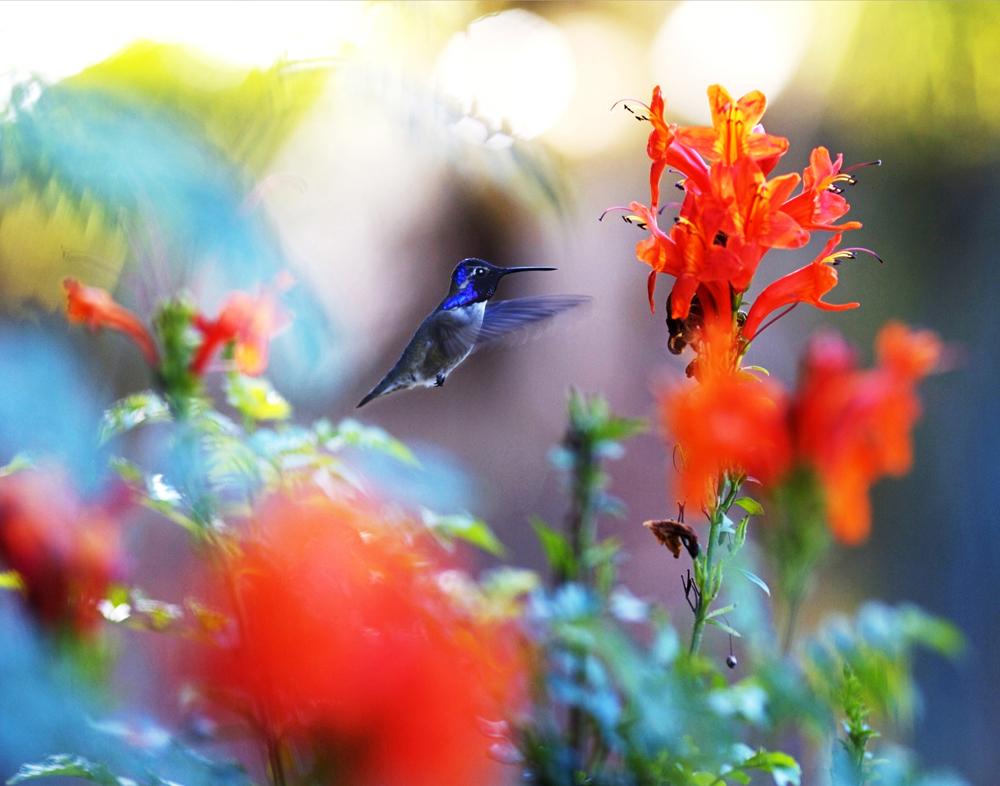 Zen Colibri, Los Cabos