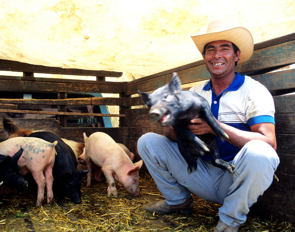 Preferred Pig, Tlaxcala