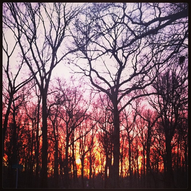 The beautiful #newyearsday sunset from my walk in the #woods with baby belle and dear friend, @padminidesign (at Carpenter's Woods, Mt.Airy)