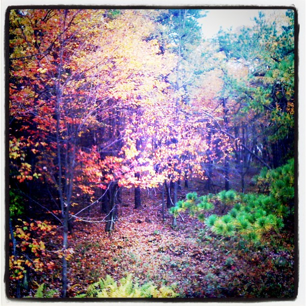 Ahhhhh!!!!! Woods and nature's majesty! :swoon: (Taken with Instagram at Poconos, PA)