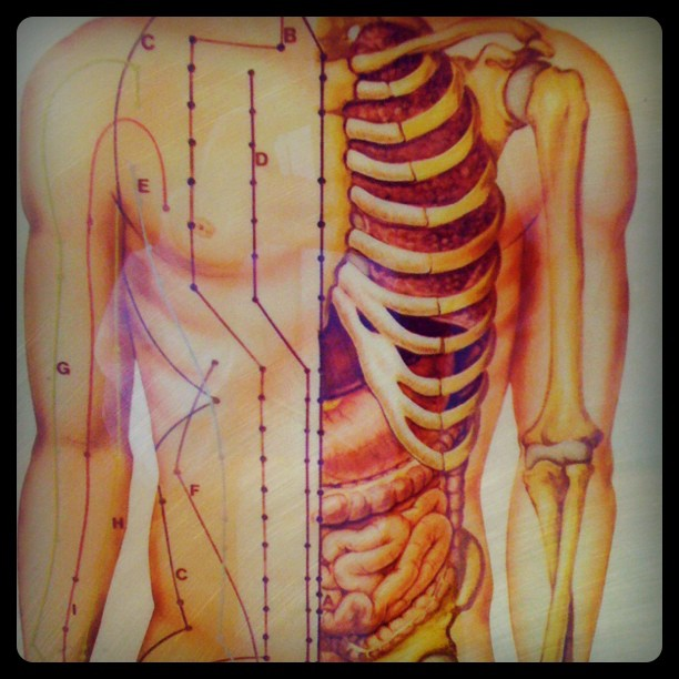 The channels of #qi! #acupuncture (Taken with Instagram)