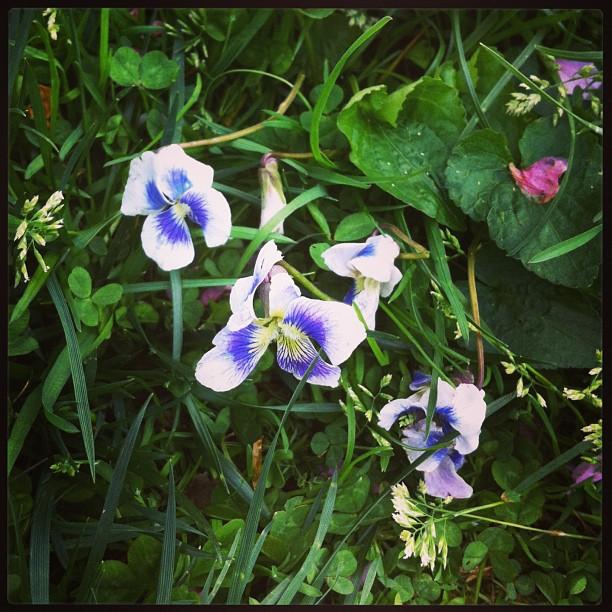#violeta!!!