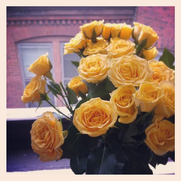 #yellowroses …