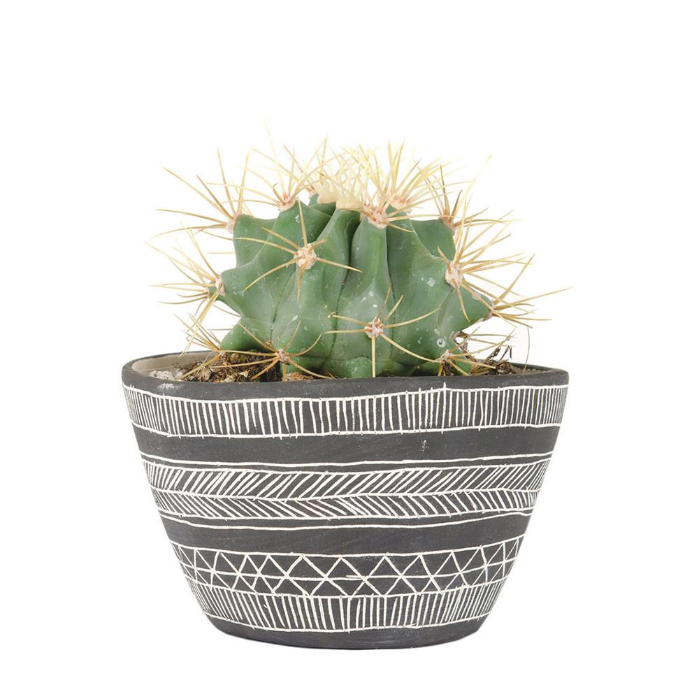 Earthenware Ceramic Table Planter