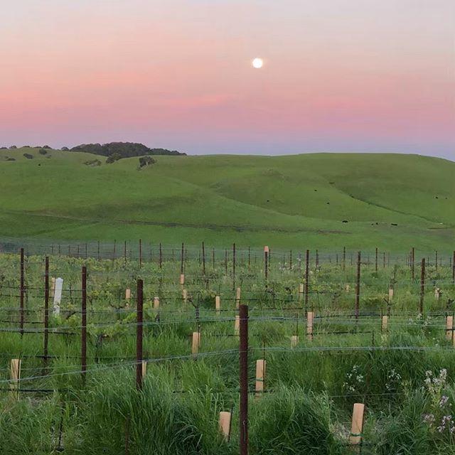 Full Moon at Azari Vineyards. Wish you were here to share it with us! #fullmoon #sunset #wine #winery #petalumagap #petaluma #wishyouwerehere