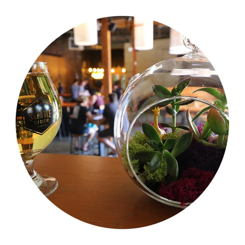 Terrarium-Cider-3.jpg