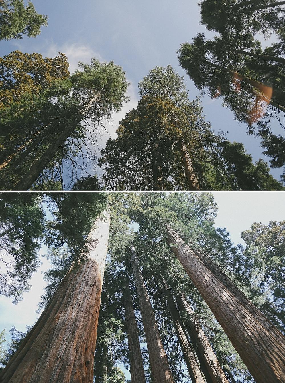 Visalia California Photographer - Patty Lagera