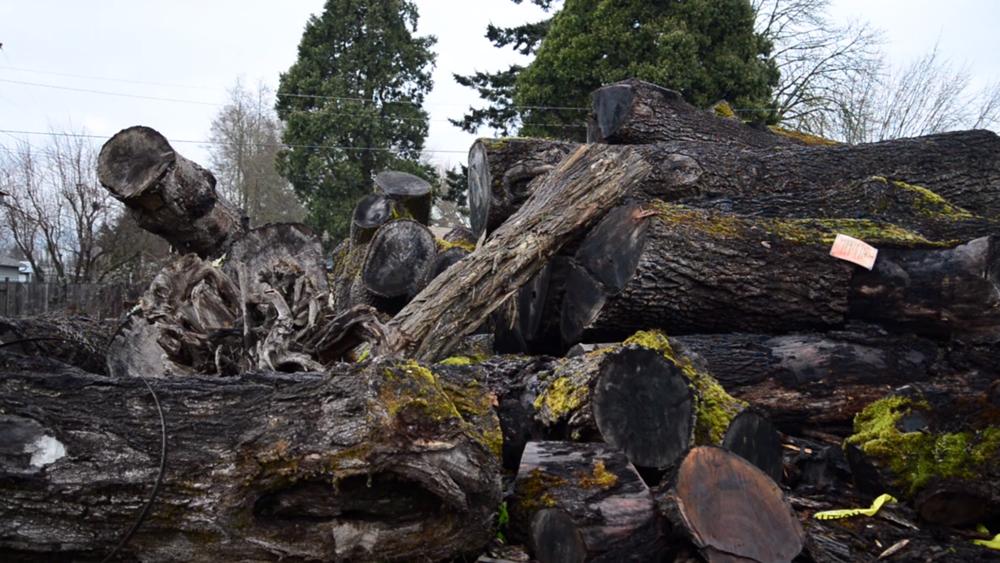 urban lumber co. short documentary