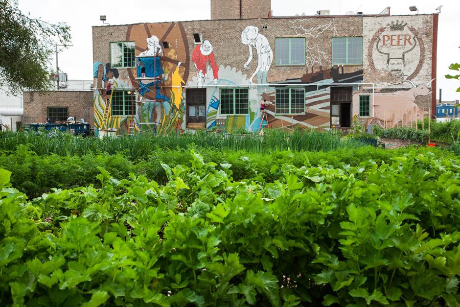 plant-chicago-1.jpg