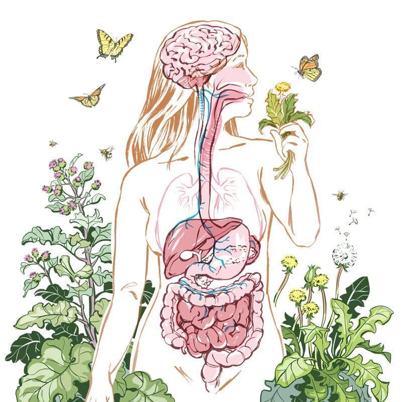 Digestion & Probiotics