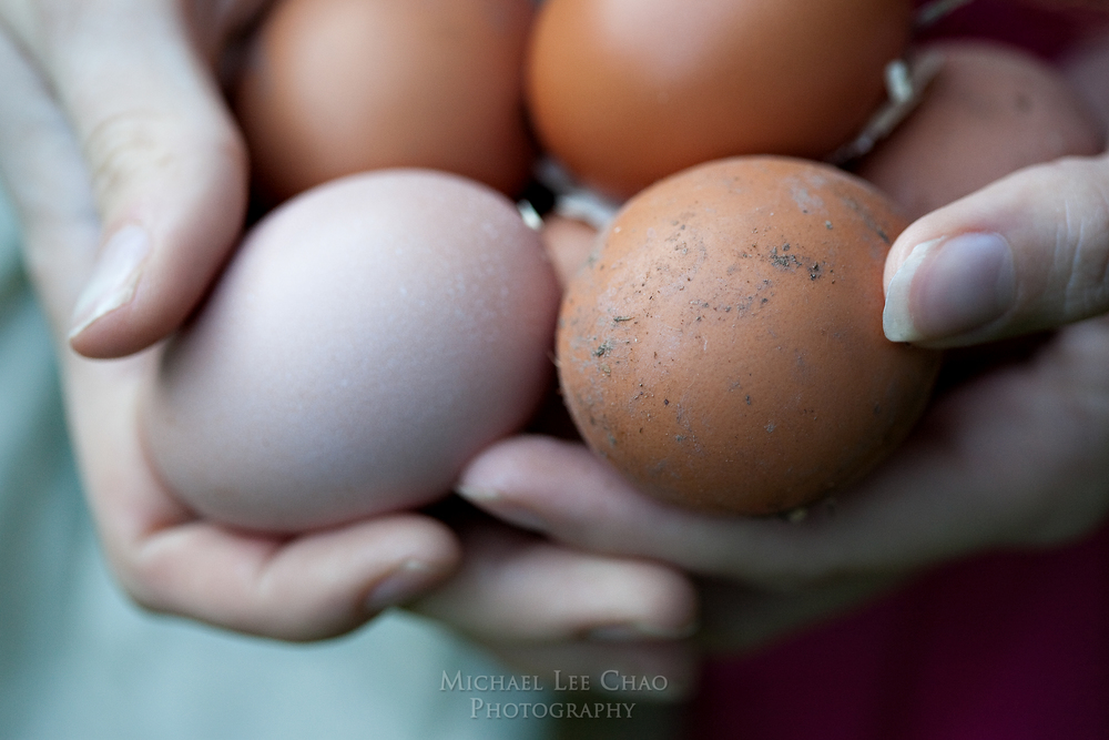 eggs-6167.jpg