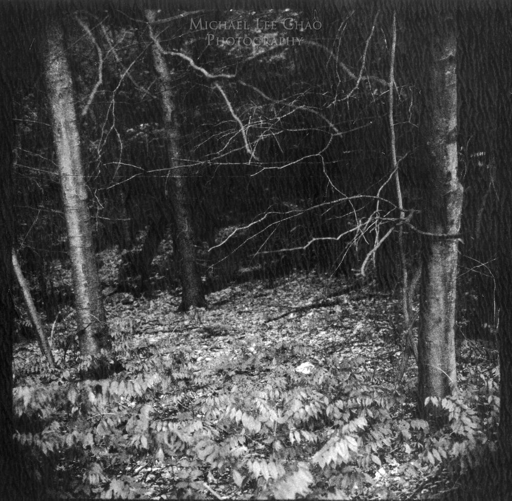 Polaroid-008.jpg