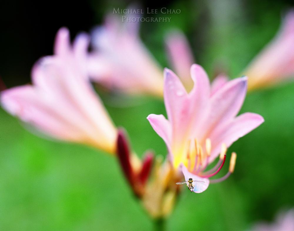 flower-003.jpg