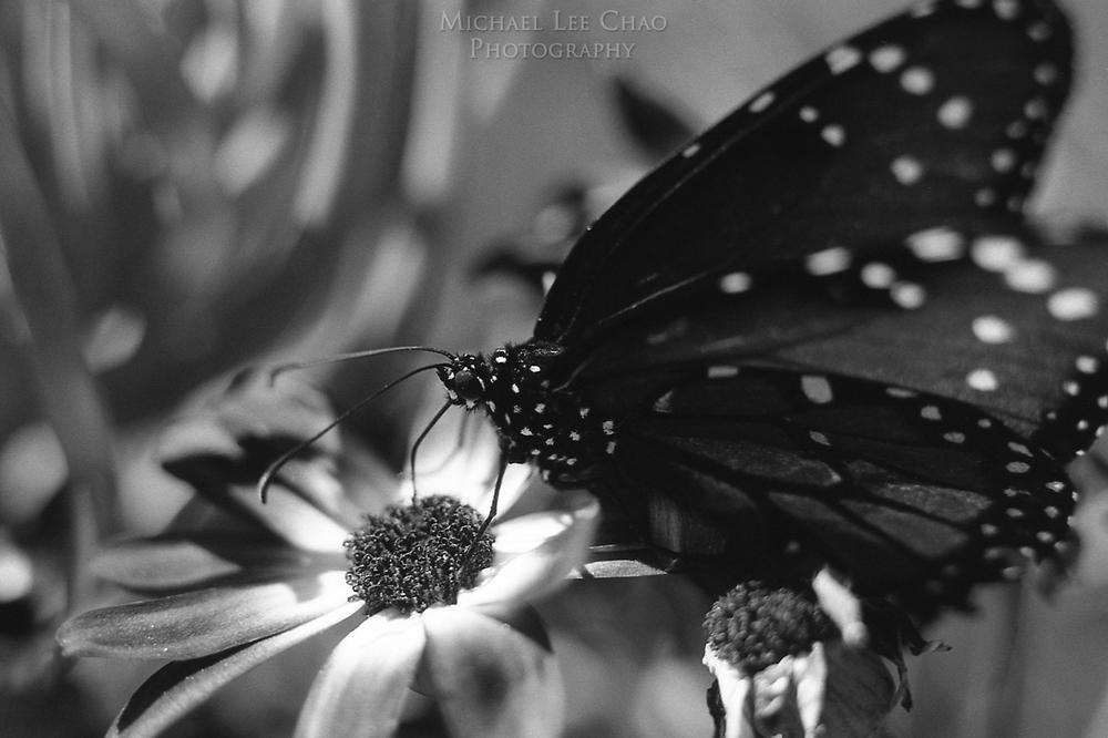 butterfly-010.jpg