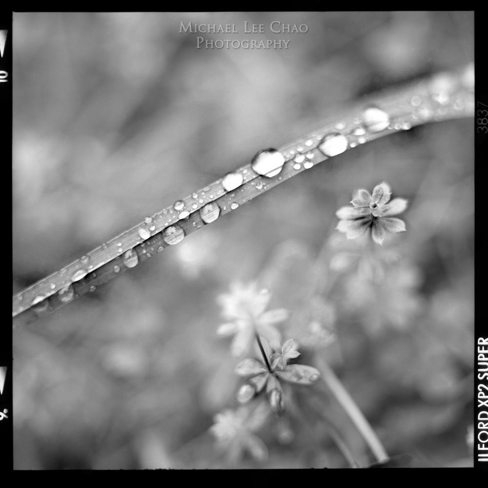 drops01.jpg