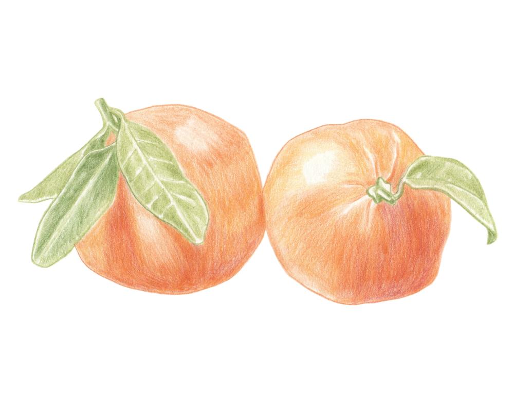 mandarines.jpg