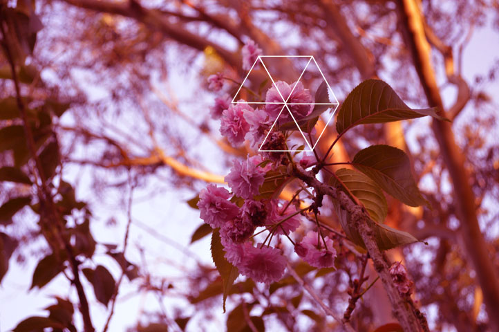 Geo Triangles Blossoms // Blog-Action
