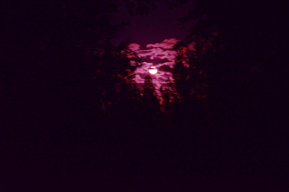 purple moon // blog-action