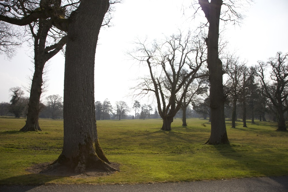 Trees on the Adare Manor grounds.  (Adare, Ireland.)