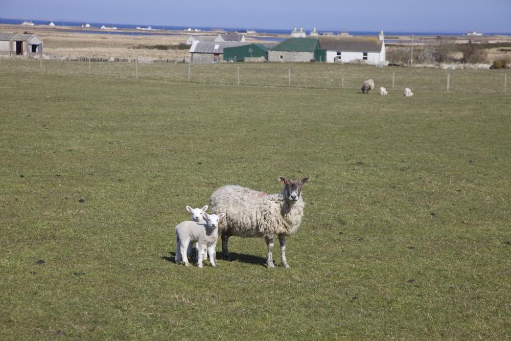 A family photo between John O'Groats and Dunnet Head. (Scotland.)