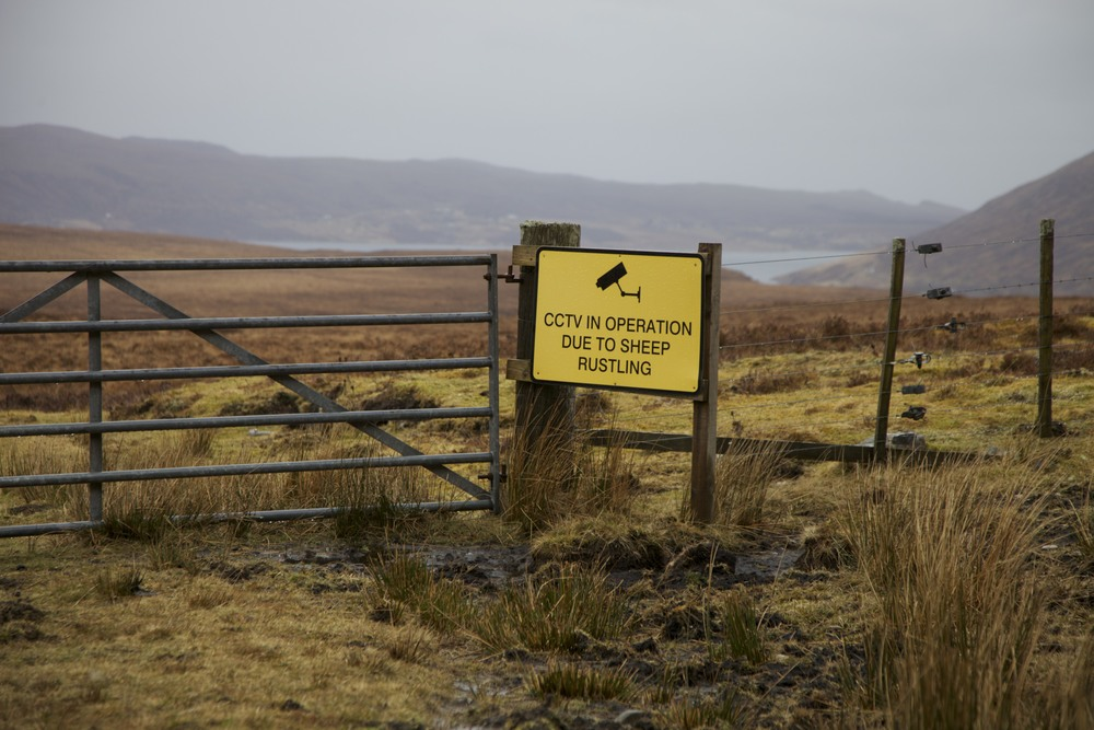 Not something I expected to see.  (Vaguely near Ullapool, Scotland.)