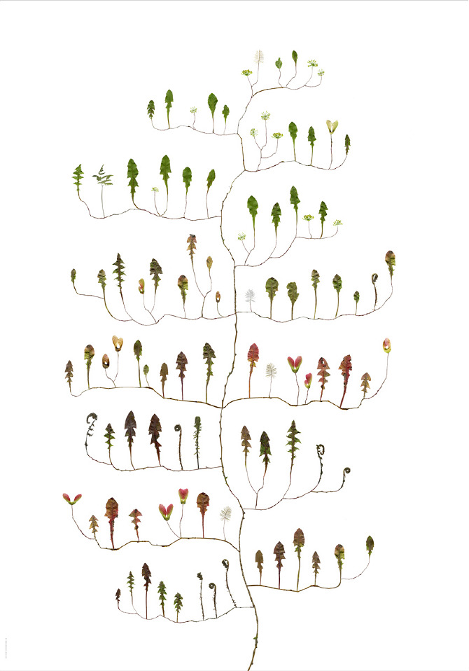 "Artist: Lotta Olsson  Title: Maskrostrad/Dandelion Tree  Dimensions: 27 1/2"" x 39 3/8""  Method: illustrated work on paper  Condition: new - signed print"