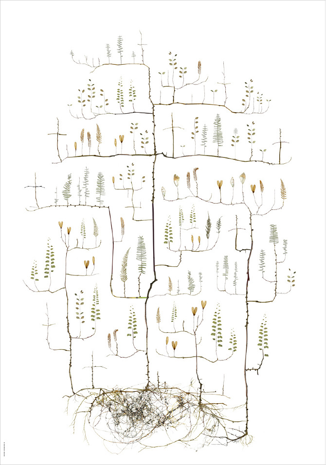 "Artist: Lotta Olsson  Title: Maltrad/Moth Tree  Dimensions: 27 1/2"" x 39 3/8""  Method: illustrated work on paper  Condition: new - print"