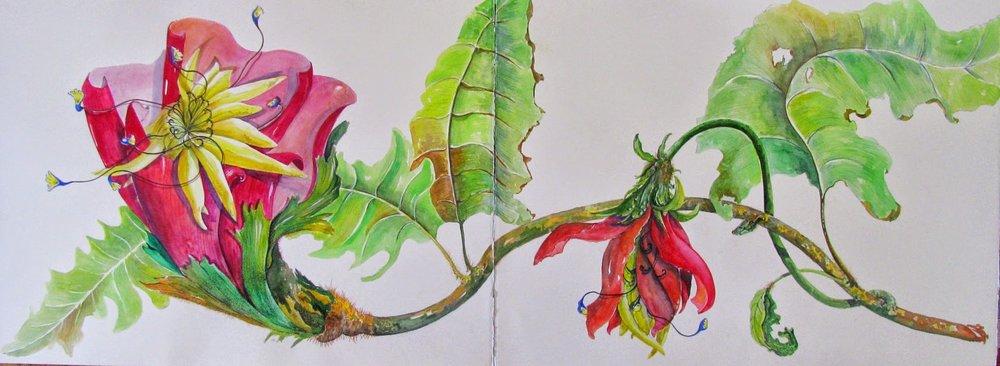 "Artist: Vico Fabbris  Name: Sidussania  Dimensions: 60"" x 22"""