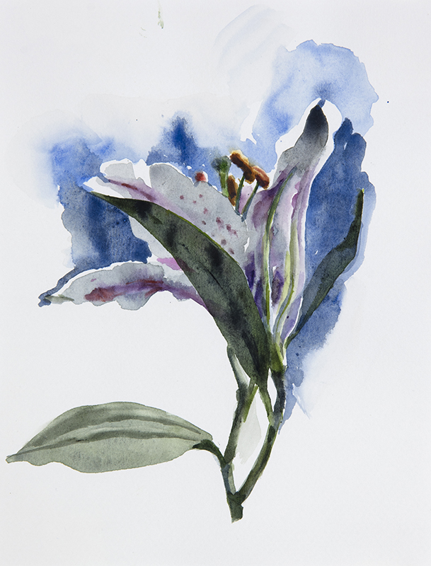 "Artist: Wendy Artin  Title: Lily on Blue 2  Date: 2017  Size: 7"" x 9""  Method: Watercolor  Price:  Inquire"