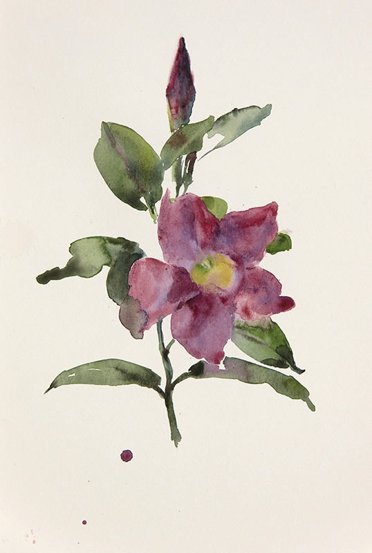 "Artist: Wendy Artin  Title: Mother's Day Blossoms  Date: 2017  Size: 2 3/4"" X 4""  Method: Watercolor  Price:  Inquire"