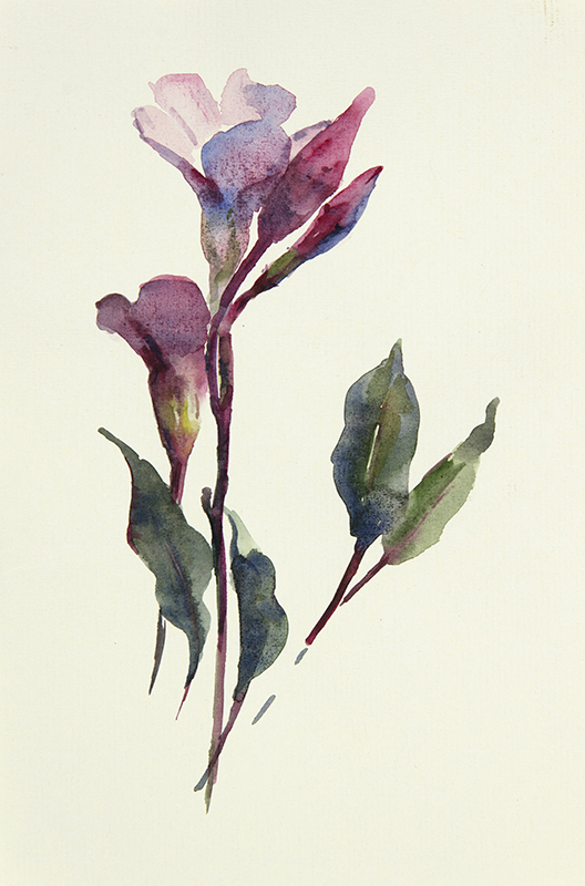 "Artist: Wendy Artin  Title: Pink Buds  Date: 2017  Size: 6"" x 9""  Method: Watercolor  Price:  Inquire"