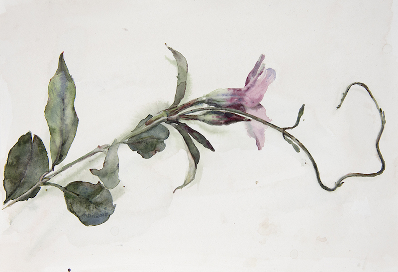 "Artist: Wendy Artin  Title: Pink Blossom Tendril  Date: 2017  Size: 3 1/6"" x 4""  Method: Watercolor  Price:  Inquire"