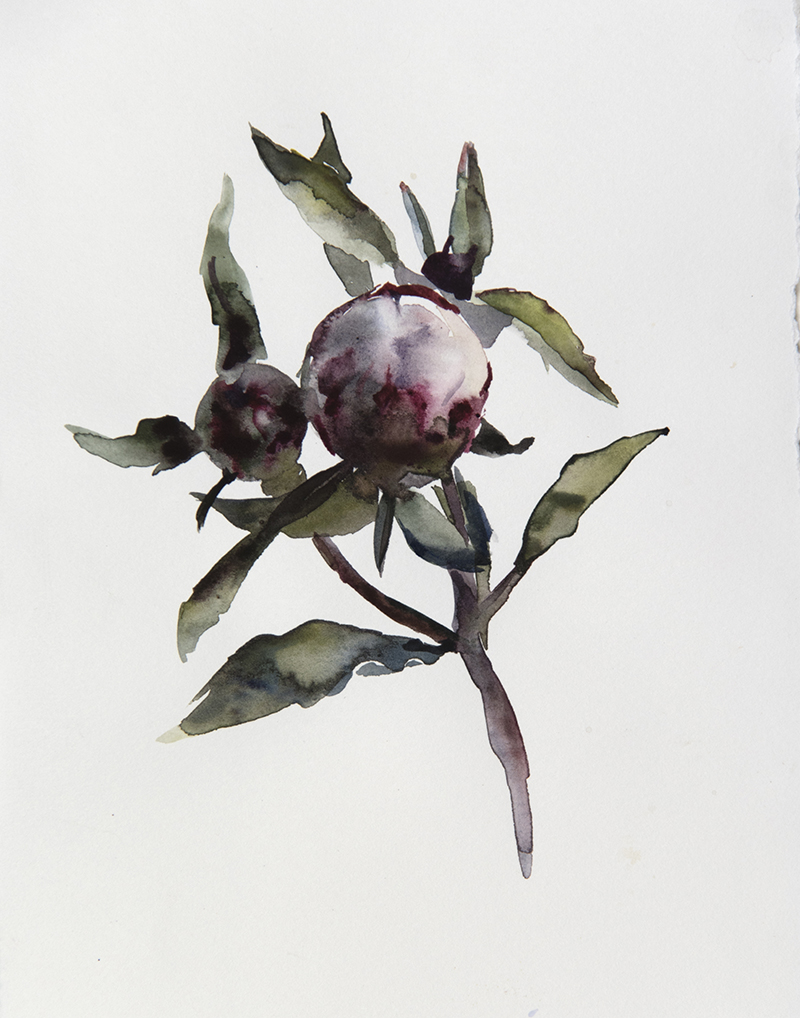 "Artist: Wendy Artin  Title: Peonies 2  Date: 2018  Size: 6.2"" x 9.5""  Method: Watercolor  Price:  Inquire"