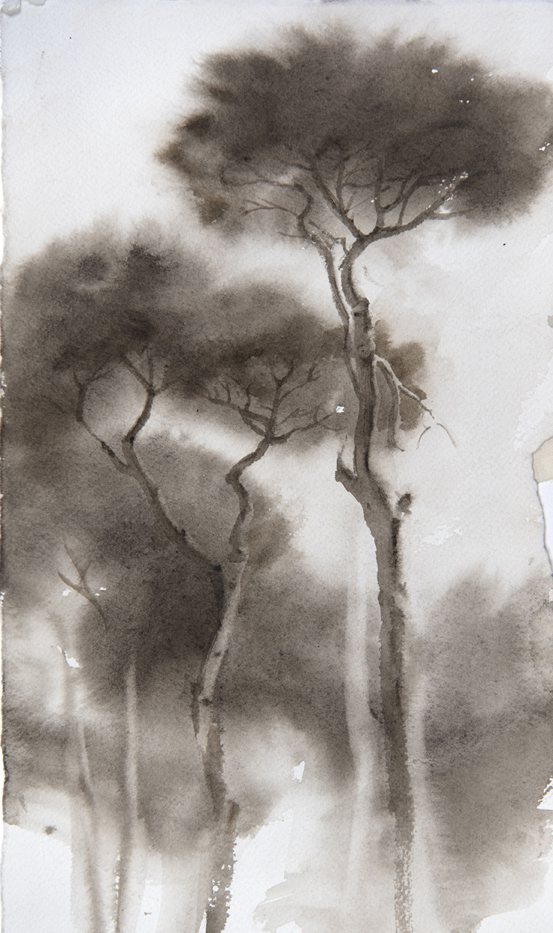 "Artist: Wendy Artin  Title: Pines Villa Pamphili  Date: 2018  Size: 7.5"" x 11""  Method: Watercolor  Price:  Inquire"
