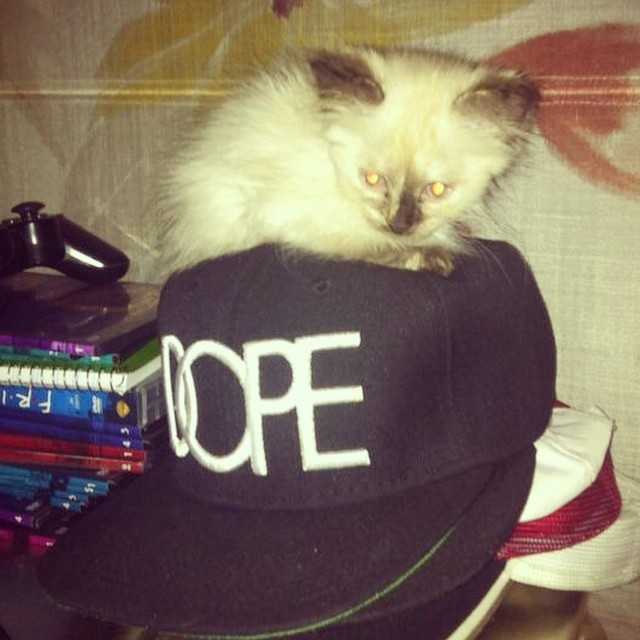 #Kitty knows how it is!! 😏😏😎 #kitten #cute #dope #swag #picoftheday