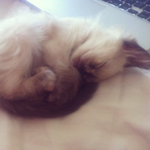So in #love with this lil thingggg 😍😍😍 #kitten #cute #kitty #toocuteforyou