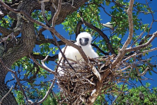 Bird_Nest_0691.jpg