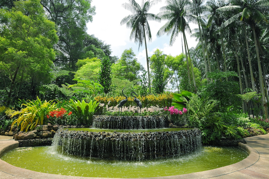Singapore Botanic Gardens. Image courtesy of the Singapore Tourism Board.