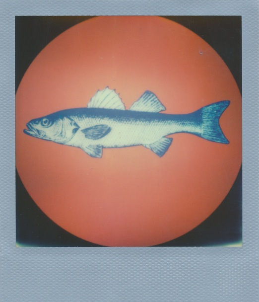 poisson_polaroid.jpg