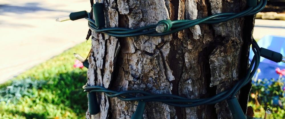 Tree Wraping