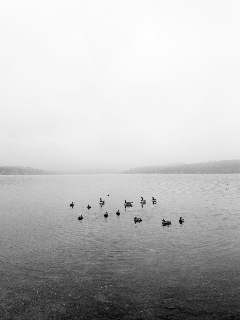 Magnuson Park, Seattle, WA | iPhone 7 Plus