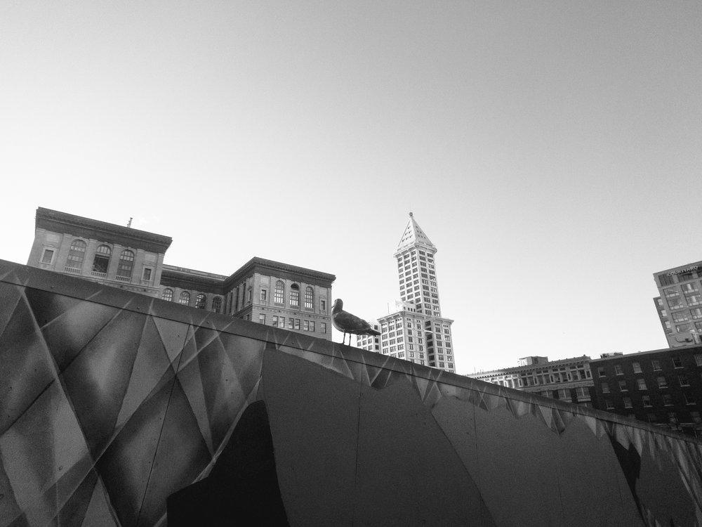 Downtown Seattle, WA | iPhone 7 Plus