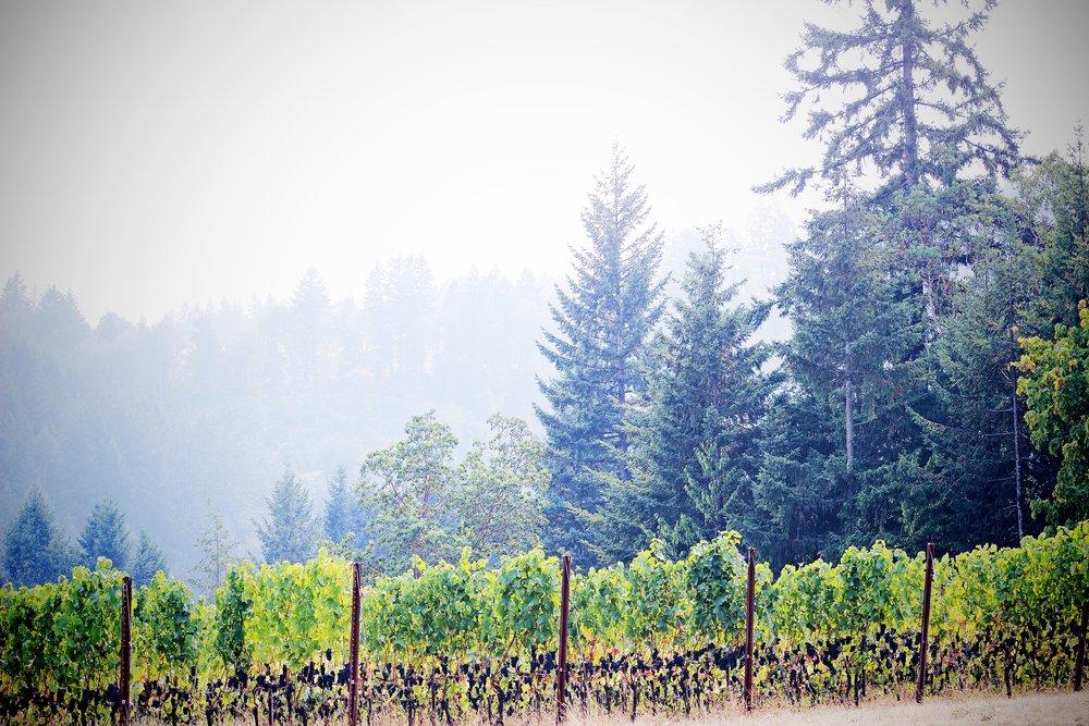 IMG_3611x Winery.jpg
