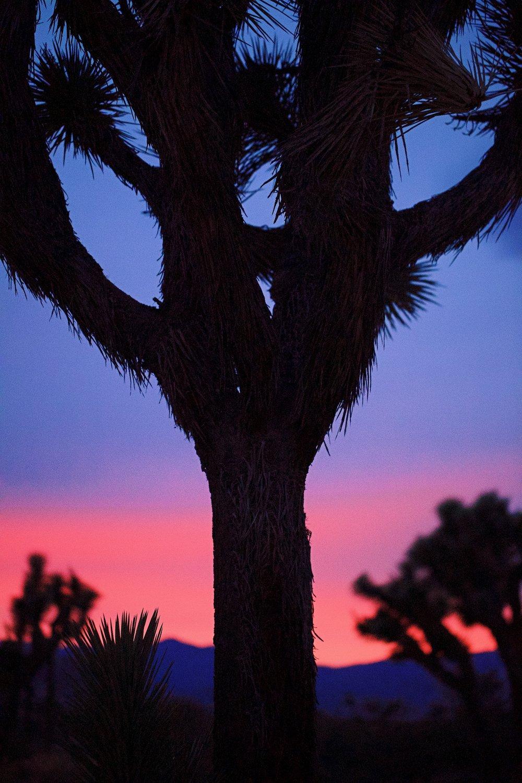 IMG_7585_x sunset.jpg