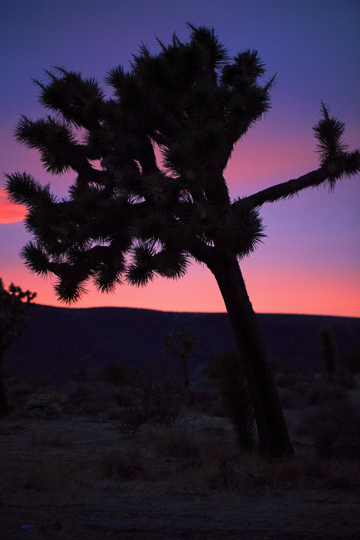 IMG_7608_x sunset.jpg