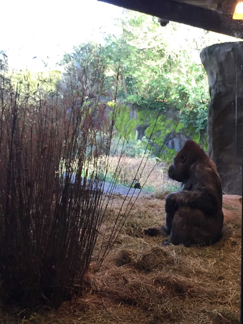 Since Yesterday - Woodland Park Zoo